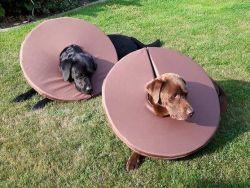 Leckschutz auf Maß für Deinen Hund